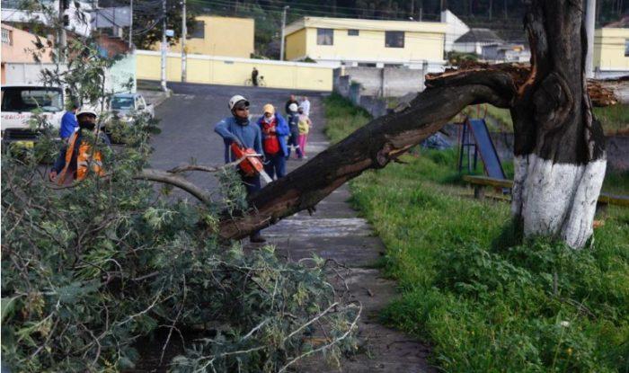 Después de las fuertes lluvias, un árbol bloqueó la vía del barrio Santa Bárbara, en el sur de Quito. Foto: Patricio Terán/ EL COMERCIO