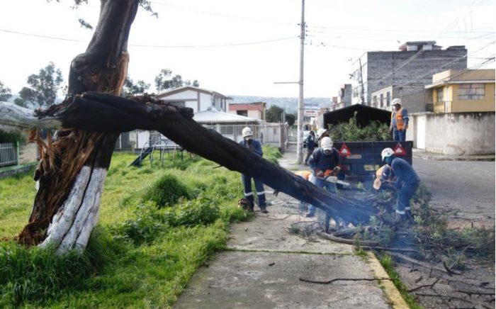 Trabajadores del Municipio cortaron el árbol para habilitar el paso. Foto: Patricio Terán/ EL COMERCIO