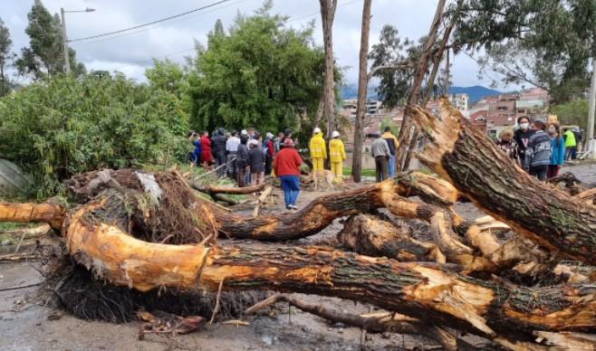 Árboles arrancados de raíz y palizadas bloquearon vías, que fueron inundadas por el agua de los ríos. Foto: Cortesía