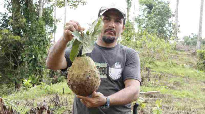 Amado De la Cruz Chávez se dedicaba a la tala de árboles. Ahora trabaja en la reserva Canandé de Fundación Jocotoco. Foto: Cortesía Efraín Cepeda