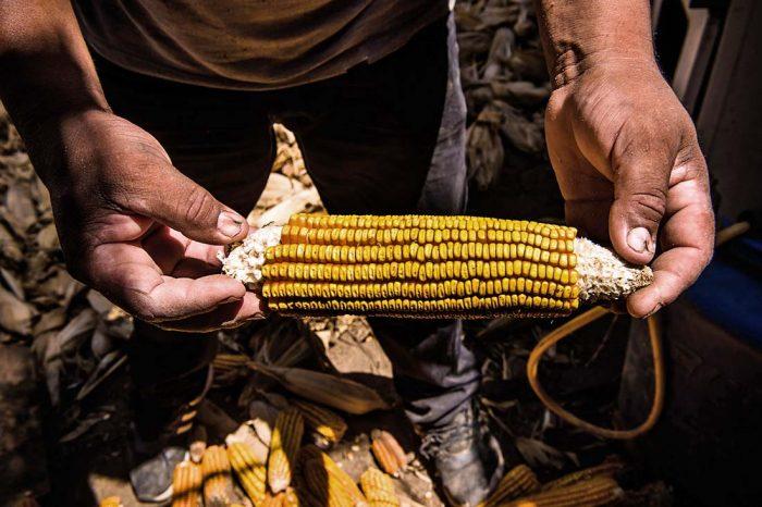 Especial: Agricultura andina: La encrucijada de los transgénicos