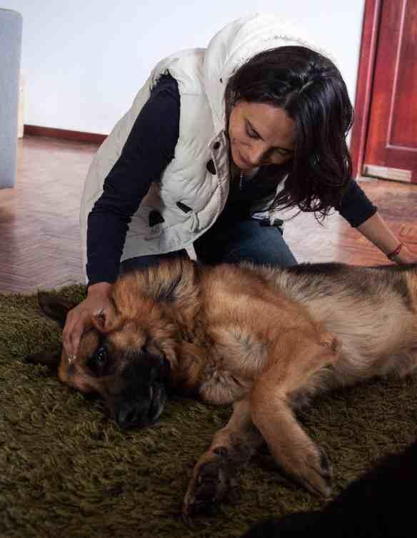 Diana de la Torre ayuda a los animales y a las personas durante este proceso. Foto: Cortesía Diana De la Torre/Animal Therapy