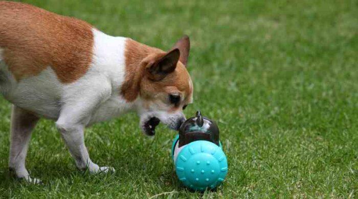 Los juguetes estimulan el olfato de los perros. Foto: Julio Estrella/El Comercio
