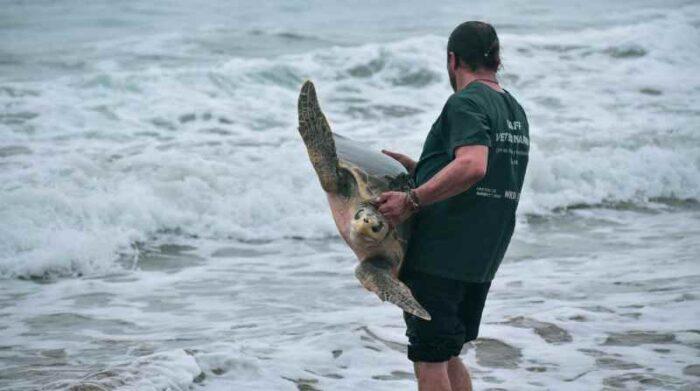 Alemán rehabilita tortugas con el fin de regresarlas a su hábitat natural. Foto: Cortesía Rubén Alemán