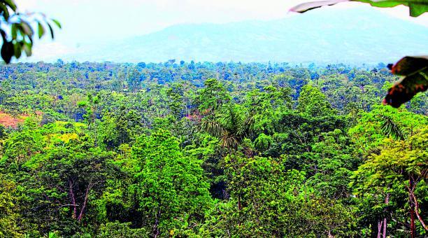 En la zona suroeste de Peripa  se conservan 20 hectáreas de bosque. Foto: Juan Carlos Pérez para El Comercio