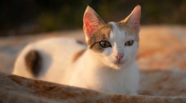 Las aves de las ciudades son las más vulnerables a los ataques de los felinos. Foto: Pixabay