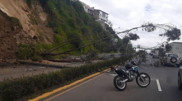Un árbol cayó en la av. Velasco Ibarra y obstaculizó la vía al tráfico vehicular. Foto: Cortesía AMT