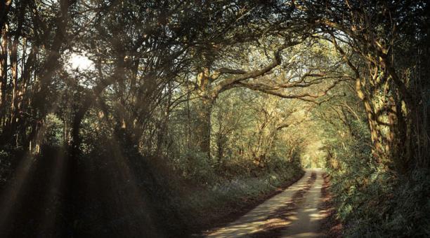 Reino Unido hará una generosa inversión en el cuidado de la naturaleza. Foto: Pixabay