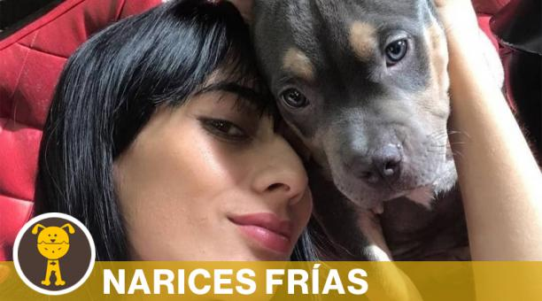 Las cenizas de la mascota de dos años y medio de edad reposan en la casa de María Fernanda y su esposo. Foto: Captura Diario El Tiempo de Colombia