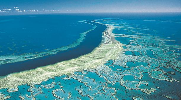 La Gran Barrera de Coral, ubicada en Australia, ha perdido más de la mitad de sus corales desde 1995.