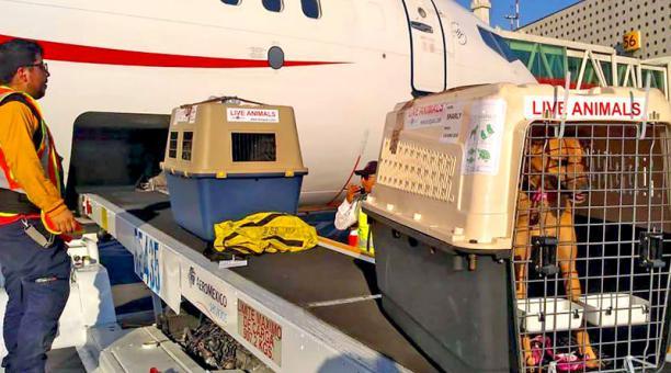 Una de las opciones es llevar a la mascota como equipaje en la bodega. Foto: Cortesía