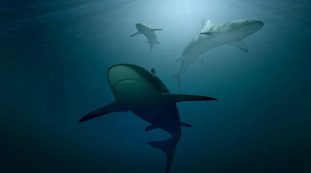 Un estudio difundido por la Universidad James Cook, en Australia, señala que se ha detectado que la presencia global de tiburones y rayas oceánicos ha caído a tal punto que el 75% de estas especies actualmente se consideran en peligro de extinción. Foto: