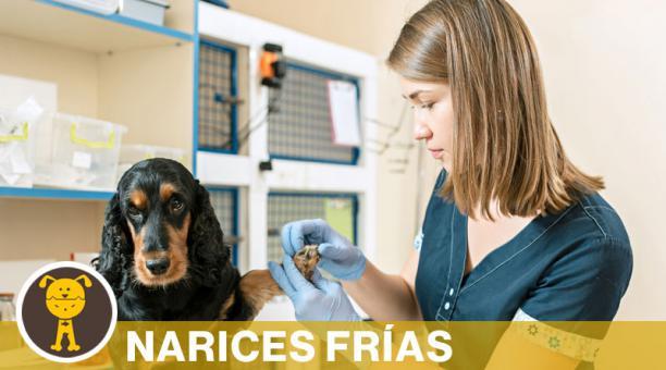 Durante el chequeo anual, el especialista revisa el estado físico de la mascota y aplica las vacunas necesarias. Foto: Freepik