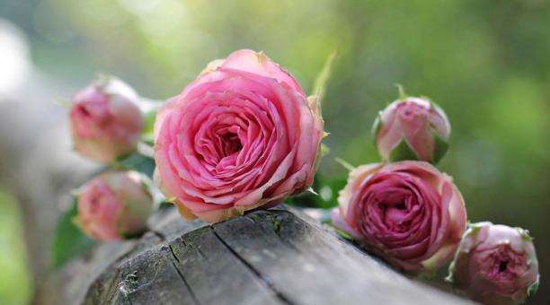 Las flores dan felicidad a quien las recibe e incluso eliminan la ansiedad. Foto: Pixabay