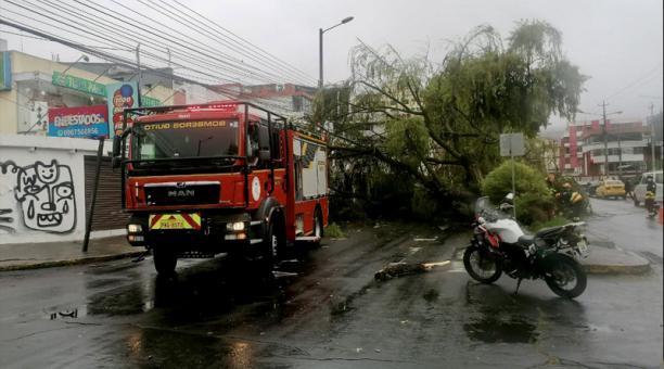 Los bomberos divulgaron a través de sus redes sociales imágenes de un camión del CBQ recogiendo el árbol de gran tamaño que se encuentra sobre la calzada mojada por las lluvias registradas la mañana de este viernes.