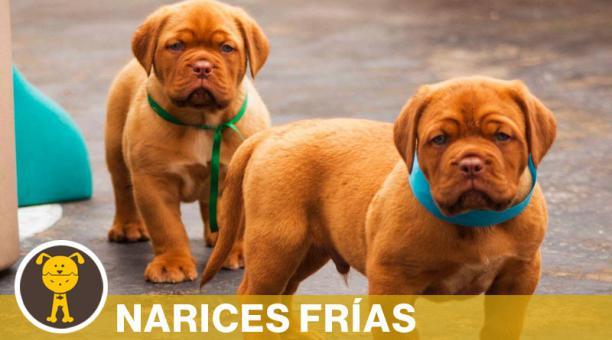 Según la ordenanza del DMQ, las hembras pueden tener solo una camada de cachorros al año. Foto: Cortesía