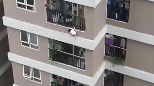 La pequeña de tres años cayó desde el balcón de su departamento en Hanói. Un repartidor le salvó la vida. Foto: captura.