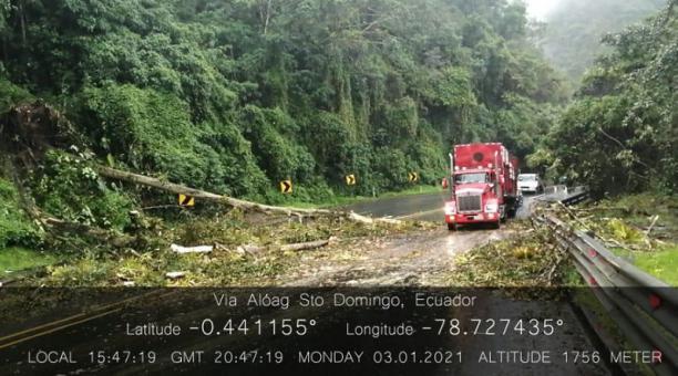 Un árbol cayó en una zona de la vía Alóag - Santo Domingo