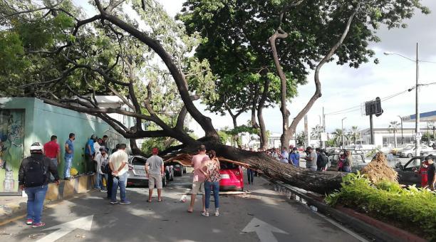 El Cuerpo de Bomberos de Guayaquil y la ATM atendieron la emergencia generada por un árbol que se desplomó sobre los vehículos que circulaban en el sector de las avenidas Isidro Ayora y De las Américas. Foto: Cortesía @ATM_Transito