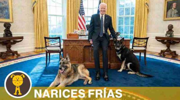 Champ y Major son las mascotas de Joe y Jill Biden. Foto: @potus