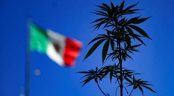 Personas muestran una planta de marihuana el 09 de Marzo de 2021, en el Zócalo de la Ciudad de México (México). Foto: EFE