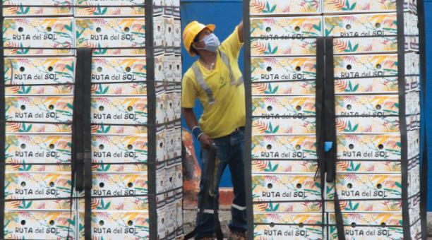 El sector bananero consolidó sus envíos en los cuatro años del acuerdo entre Ecuador y la Unión Europea. Foto: Archivo / El Comercio