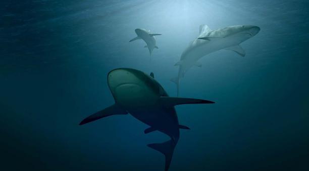 Imagen referencial: Los tiburones, tortugas marinas, pingüinos y otros animales acuáticos suelen circunnavegar por largo tiempo. Pixabay