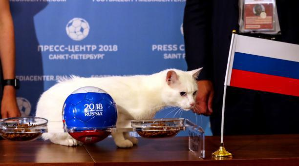 El gato Aquiles, durante una de sus predicciones en el Mundial de Rusia 2018. Foto: EFE