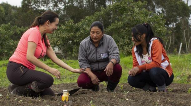 De izq. a der.: María del Pilar Mora, de Alimentarte S.A., junto a las productoras Olga Chiguano y Jennyfer Vargas. Las agricultoras proveen de insumos a la empresa para la elaboración de bebidas de chochos. La firma busca exportar a Suiza. Foto: Cortesí