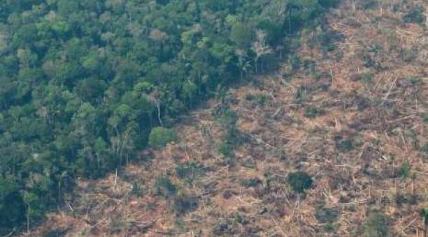 La ganadería es uno de los causantes de la deforestación en la Amazonía. El mayor porcentaje de pérdida de bosque se ha registrado en Brasil. Foto: EFE