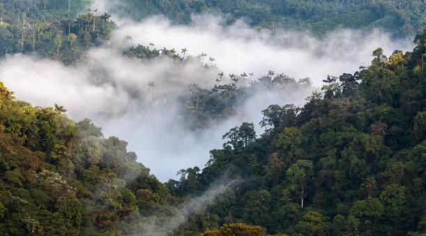 Los bosques de Ecuador recogen 1.27 toneladas de CO2 al año del ambiente. Foto: Cortesía UDLA
