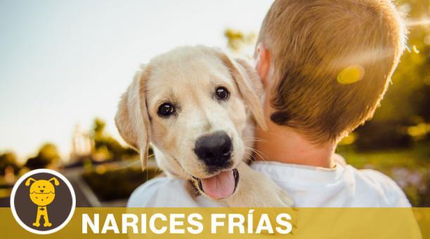 Los perros no solo sienten celos cuando ven a sus dueños con un rival, sino también cuando imaginan interacciones sociales que inducen a los celos. Foto: Pixabay