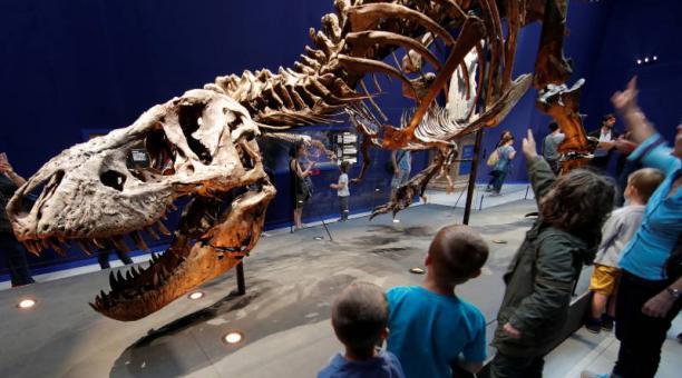 Esqueleto de 67 millones de años de Tyrannosaurus Rex llamada Trix en Museo Nacional de Historia Natural de Francia, París. Foto: Agencia Reuters
