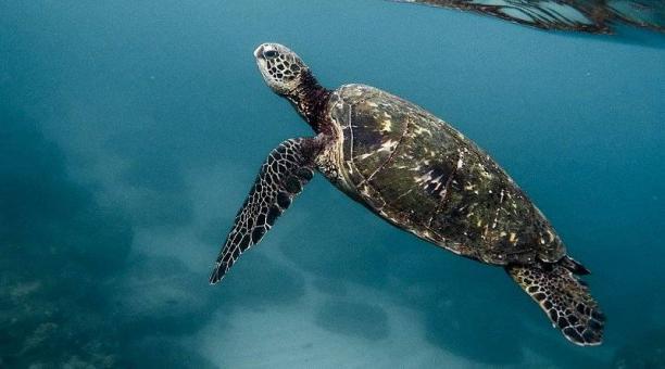 Imagen referencial sobre los riesgos de las especies protegidas frente al tráfico de vida silvestre. Foto: Pixabay