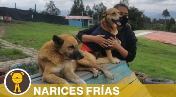El refugio de Acción Animal Ecuador se encuentra en Píntag. Allí habitan alrededor de 180 animales, entre perros, gatos, caballos y burros. Foto: cortesía Acción Animal Ecuador