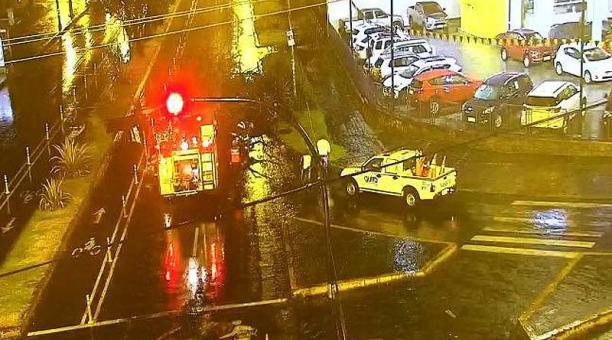 El árbol cayó en la avenida Eloy Alfaro y Amazonas. Foto: ECU 911