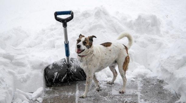 Foto referencial: Los guardias de la colapsada central nuclear de Chernóbil cuidan a los perros de la Zona de Exclusión. Pixabay