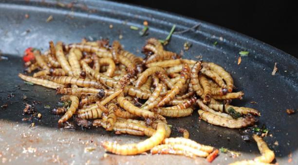 Imagen referencial. El gusano de la harina o larva de escarabajo oscuro (Tenebrio molitor larva) puede ser consumido como alimento, autorizó la Unión Europea