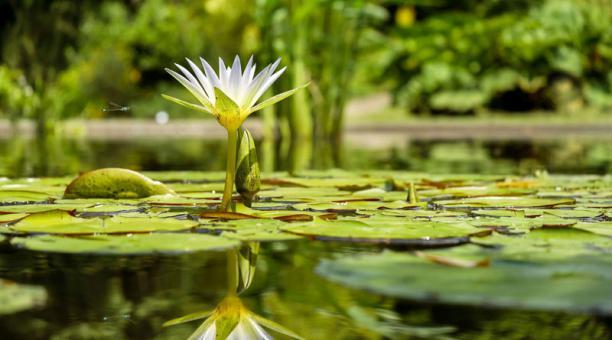 Imagen referencial. Una planta acuática fósil fue descubierta en Rumania. Foto: pixabay