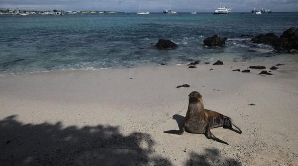 Galapagos Planeta