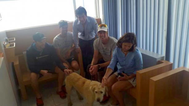 Arthur antes de ser atendido en el hospital veterinario All Pets