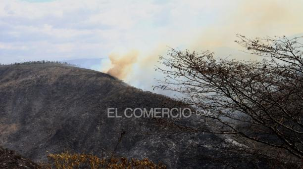 Los bomberos evalúan en estos días las secuelas del incendio en Puembo; pero a las 14:33, las llamas regresaron. Foto: Eduardo Terán / EL COMERCIO.