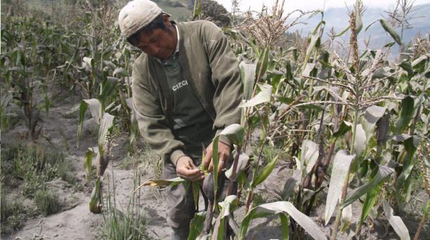 Un camino secundario de la población de El Manzano, cantón Penipe, cubierto de polvo volcánico.