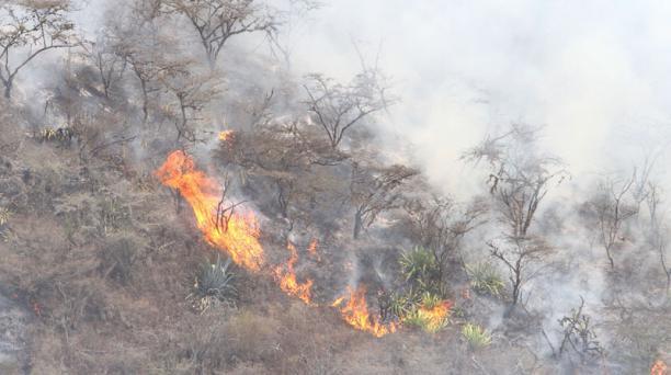 Tres bomberos fallecieron en el incendio en Puembo en septiembre del 2015. Foto: Archivo / EL COMERCIO