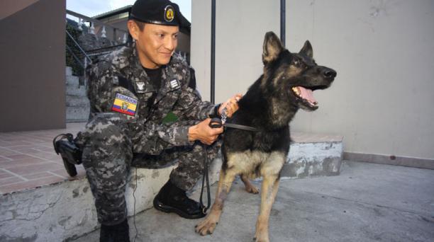 GOE la perrita Killy estuvo en el terremoto de Manta y sufrio una herida en su pata derecha con el capitan Luis Cifuentes Foto:  / Paul Rivas Bravo / El Comercio / Ecuador