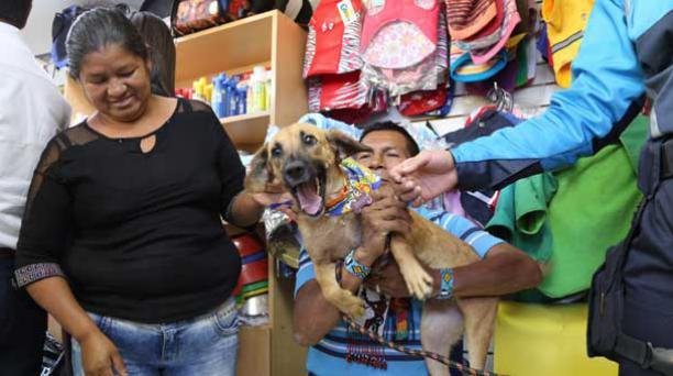 Melissa, la perra que se encontraba dentro del bus que se accidentó en la vía Papallacta-Pifo se reencontró hpy, 19 de agosto de 2016, con sus dueños. Foto: Alfredo Lagla/ EL COMERCIO.