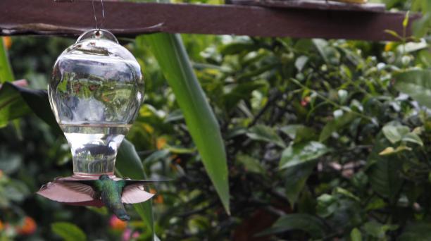 Los jardines amigables deben tener una zona con comederos y bebederos para atraer a las diferentes especies de pájaros que viven en la ciudad. Foto: Galo Paguay/ EL COMERCIO.