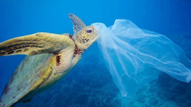 La campaña de la WWF para la Hora del Planeta busca salvar a animales amenazados por los plásticos, como es el caso de las tortugas marinas