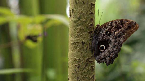 Las mariposas de la muestra miden desde 2 hasta 15 centímetros. Foto: Diego Pallero/ EL COMERCIO