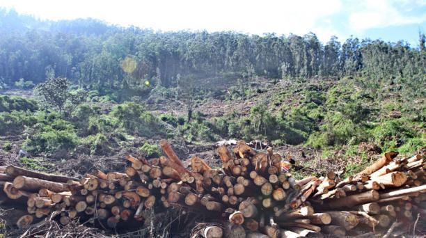 En el barrio San Antonio, en El Tingo, se evidencia la deforestación. Foto: Eduardo Terán / EL COMERCIO